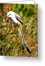 Flycatcher With A Meal Greeting Card