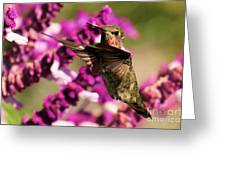 Flying At Attention Greeting Card