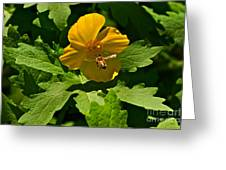 Flying Bee And Wood Poppy Greeting Card