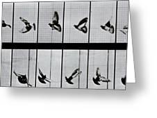 Flying Bird Greeting Card by Eadweard Muybridge
