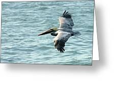 Flying Brown Pelican  Greeting Card