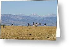 Flying Canadian Geese Colorado Rocky Mountains 1 Greeting Card