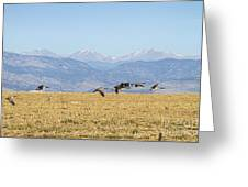 Flying Canadian Geese Rocky Mountains 2 Greeting Card