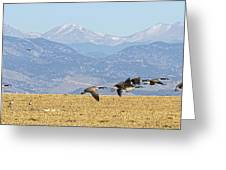 Flying Canadian Geese Rocky Mountains Panorama 2 Greeting Card