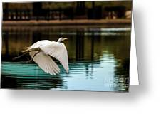 Flying Egret Greeting Card by Robert Bales