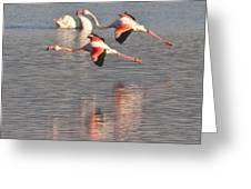 Flying Flamingos Greeting Card