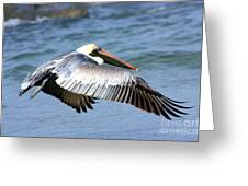 Flying Florida Pelican Greeting Card