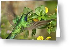 Flying Green Violetear Greeting Card