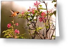 Flying Hummingbird Sipping Nectar Greeting Card