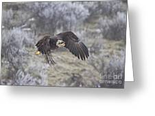 Flying Low Greeting Card by Mike  Dawson