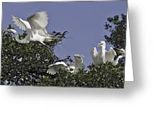 Flying The Coop Greeting Card