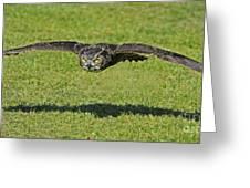 Flying Tiger... Greeting Card