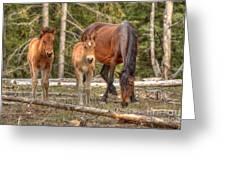 Foal Spot Greeting Card
