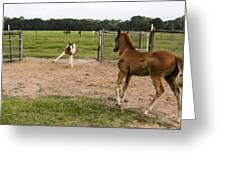 Foals At Play Greeting Card by Dana Moyer