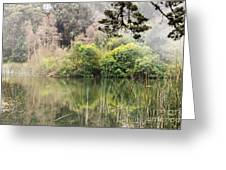 Fog And Reeds Greeting Card