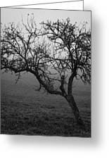 Fog And Solitude Greeting Card