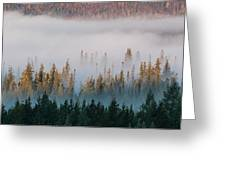 Fog And Trees Greeting Card