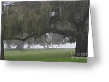 Fog In Ancient Oaks Greeting Card