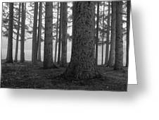 Fog Within The Pines  Bw Greeting Card