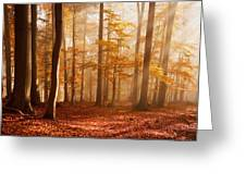 Foggy Beech Forest Greeting Card
