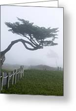 Foggy Coastal Trail In Miramar Greeting Card