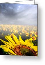 Foggy Field Of Sunflowers Greeting Card