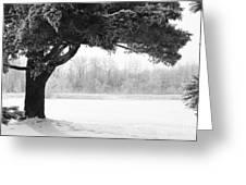 Foggy Icestorm Greeting Card