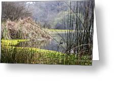 Foggy Lake Greeting Card
