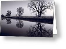 Foggy Morn Bw Greeting Card