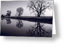 Foggy Morn Bw Greeting Card by Steve Gadomski