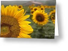 Foggy Morning At The Sunshine Farm Greeting Card