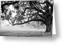 Foggy Morning On Coosaw Plantation Greeting Card