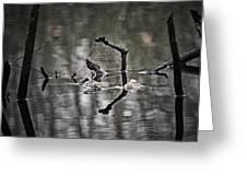 Foggy Morning Pondscape Greeting Card