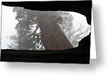 Foggy Morning Sequoias Greeting Card
