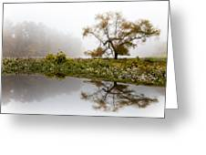 Foggy Reflections Landscape Greeting Card