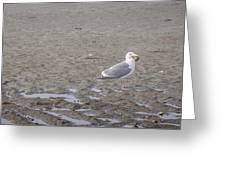 Foggy Seabird Seagulls Brunch Greeting Card