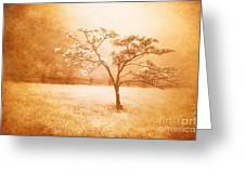 Foggy Spring In The Blue Ridge Mountains Greeting Card by Dan Carmichael