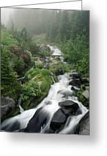 Foggy Spring Stream Greeting Card