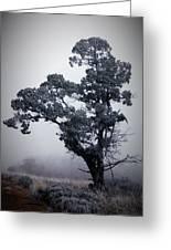 Foggy Winter I Greeting Card