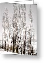 Foggy Winter Tree Fence 13271 Greeting Card
