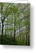 Foggy Woods Greeting Card
