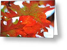 Foglie Di Rosse Greeting Card
