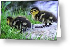 Follow The Leader Ducky Style Greeting Card