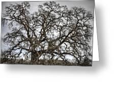 Folsom Old Oak  Greeting Card
