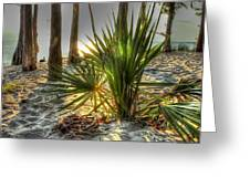 Fontainebleau Shore Greeting Card