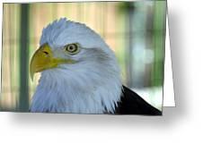Fontana Eagle Portrait 4 Greeting Card