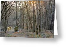 Foot Bridge In Fort Harrison State Park Greeting Card