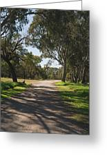 Footpath In Park With Shadows Greeting Card