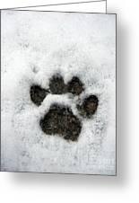 Footprint Series. Cat Greeting Card