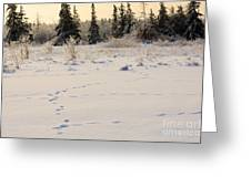 Footprints In Fresh Snow Greeting Card